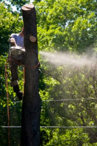 We also offer and tree services